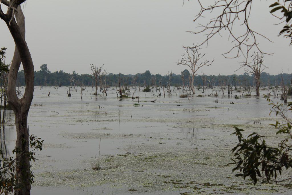 Ausblick vom Steg zu Neak Pean in Angkor