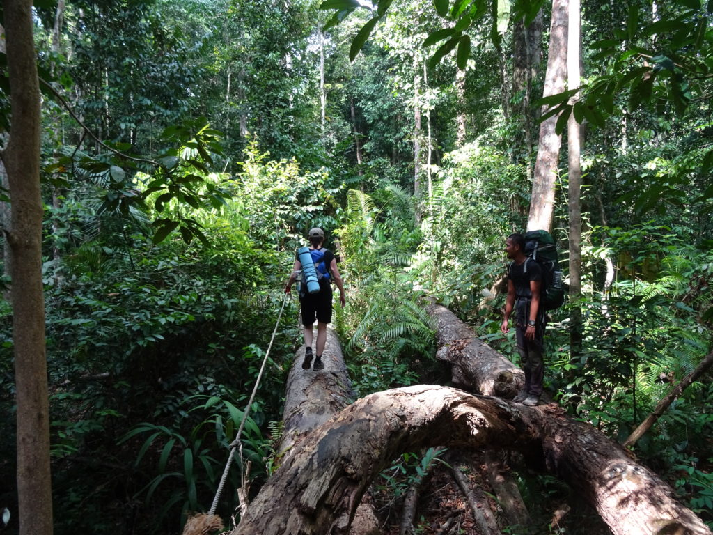 Ueber Baumstaemme zurueck auf festen Boden, Taman Negara